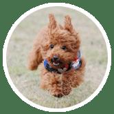 Furry-dog-running